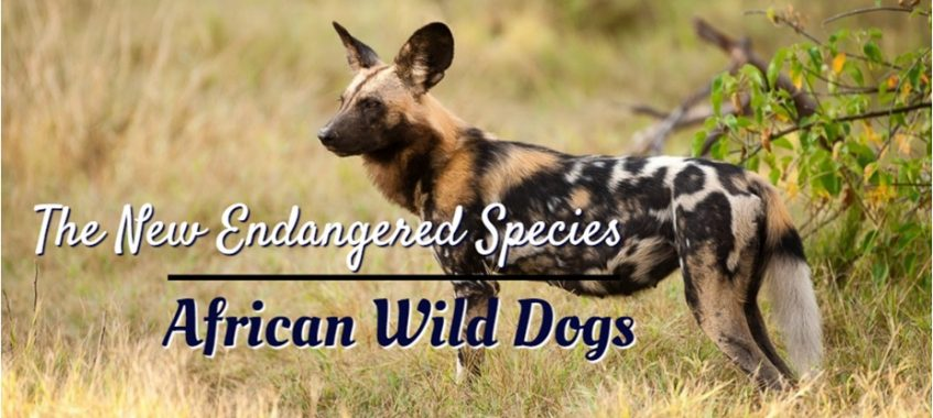 Wild Dogs In africa