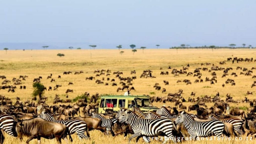 Rich wildlife in Tanzania