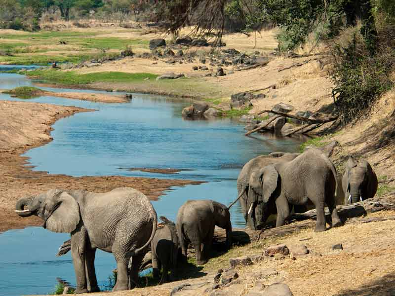 Ruaha National Park